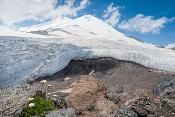 A camomile breaks through rocks on Elbrus mountain