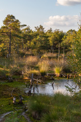 Moorlands in Germany: Pietzmoor near Scheveningen near Lueneburg in Germany in the heathland