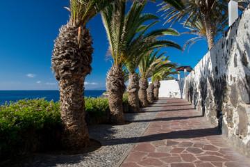 Palm lined esplanade Alcala Tenerife