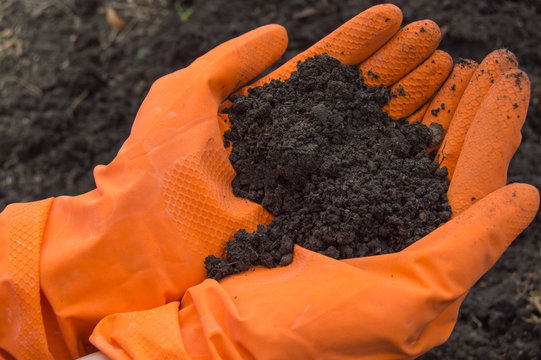 Soil samples in the hands of a biologist in orange gloves. Investigation of the problem of soil pollution