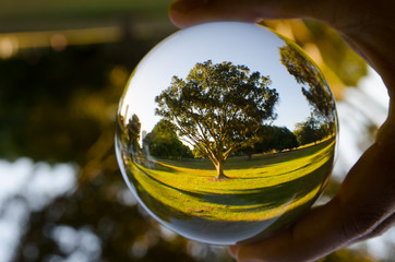 A beautiful tree photography in clear crystal glass ball.