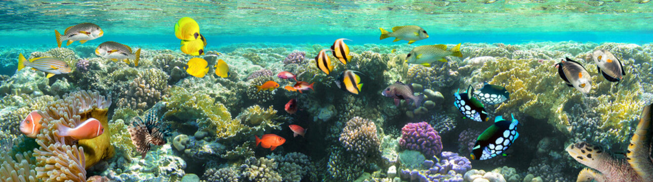 Underwater scene. Coral reef, colorful fish groups and sunny sky shining through clean sea water.