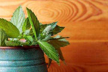 Bunch of fresh green mint leaf .