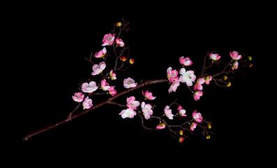 Branch of cherry flowers