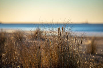 sun reflecting in dry bents and grass by the sea beach in sunset
