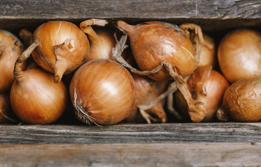 Fresh onions on rustic wooden background. Onions background. Ripe onions.