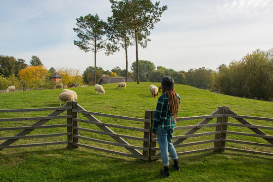young woman watching on the sheeps walking on the green grass in the farm