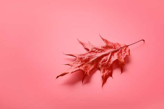 Autumn leaf on coral background