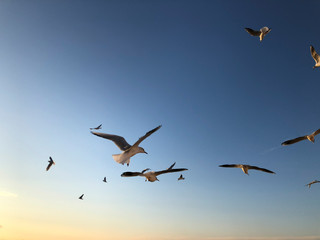 flock of seagulls flying in the sky