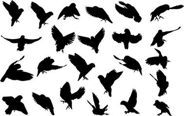 野鳥のシルエット