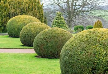 topiary balls in an English garden