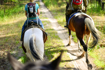 Horse ride along the trail among forests and grass.