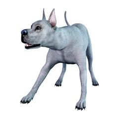 3D Rendering Blue Grat Dane Dog on White