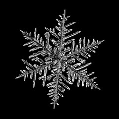 Snowflake on black background. Illustration based on macro photo of real snow crystal: beautiful stellar dendrite with complex, elegant arms, ornate shape and glossy, relief surface.