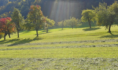 Meadow with fruit trees in autumn with sun rays