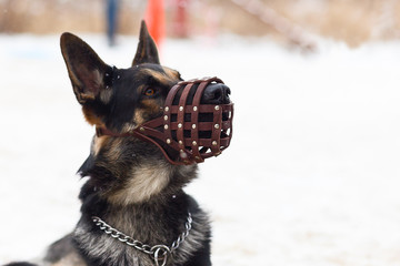 dog winter in a protective mask, muzzle Wall mural