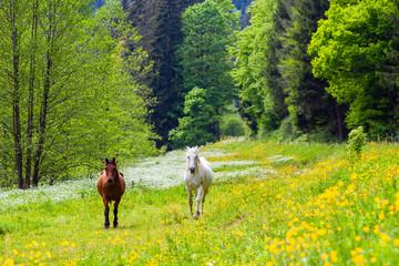 zwei Pferde auf einer Wiese am Waldrand