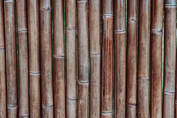 Bamboo backdrop.