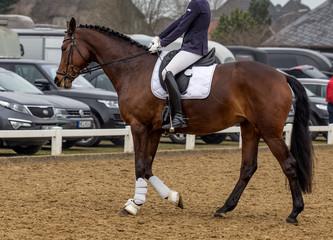 bay horse in a sport tournament
