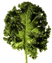 Kale against white background
