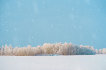 Beautiful, winter landscape of snowy forest with space for text.