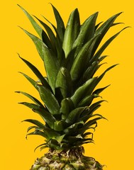 Close up of pineapple isolated on yellow background