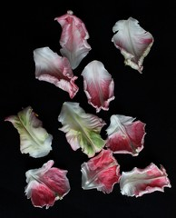 Petals against black background