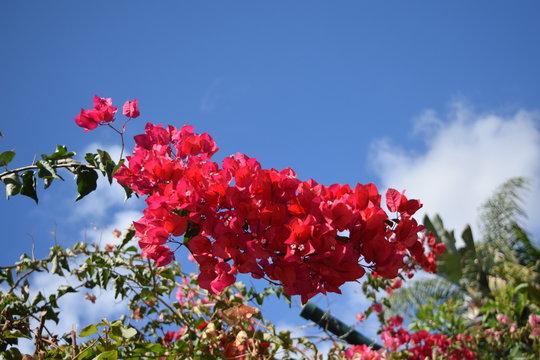 Blumen Teneriffa