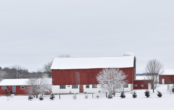 Red and white snow covered barn and trees on a farm in a rural area in winter