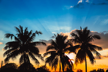 silhouette coconut tree hawaii blue sky sunset summer nature background.
