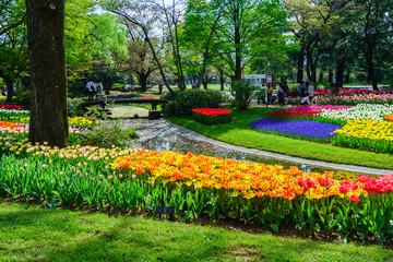 チューリップ咲く昭和記念公園