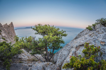 beautiful landscape high view from rocks to coast and juniper bushes, distortion perspective fisheye lens view