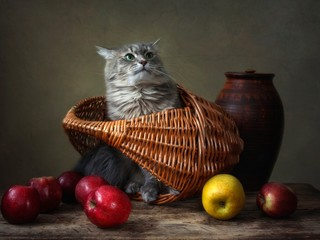 Still life with apples and curious kitty