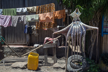 Huge octopus hanging on a rope for drying in the village of Nosy Komba island, Madagascar