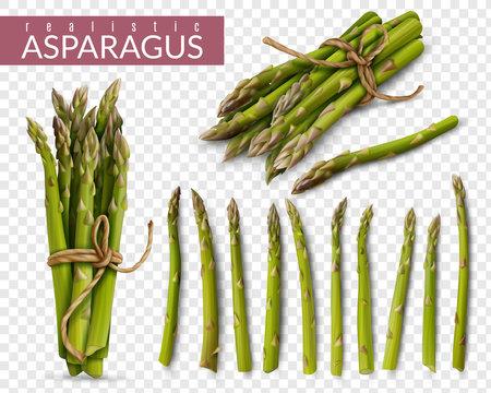 Asparagus Realistic Transparent Set