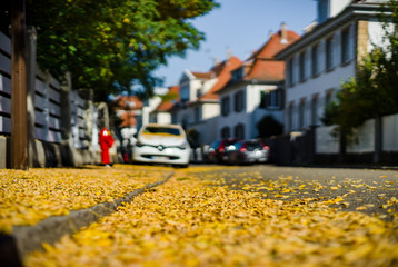 Yellow leaves on the street, Strasbourg at autumn