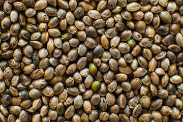 Fototapeta Many Cannabis seeds. Macro detail of marijuana seed. Organic Hemp seed. Hemp seeds background in macro. Top view.