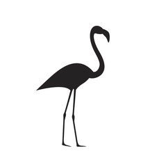 Flamingo silhouette. Isolated flamingo on white background