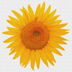 fleur de tournesol sur toile