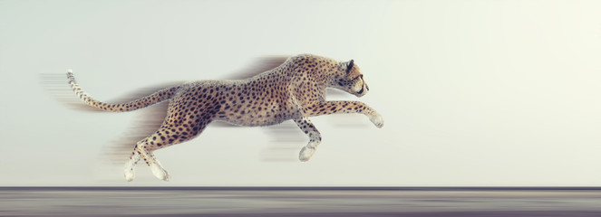 A beautiful cheetah running