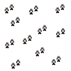 dog foot on white background