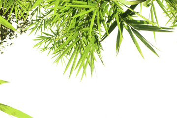 Bamboo leaves isolated on a white background for graphic design.