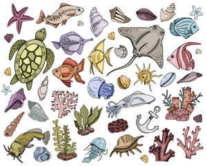 Vector seashells Set