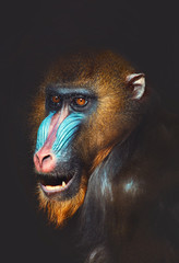 Wall Mural - portrait of a primate