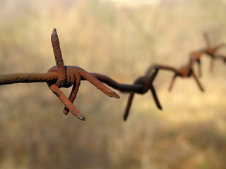 Rusty barbed wire isolated on blurred forest background. Concept of boundary, prison or immigration