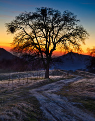 Tree silhouetted against sunset in Kings Canyon National Park, California