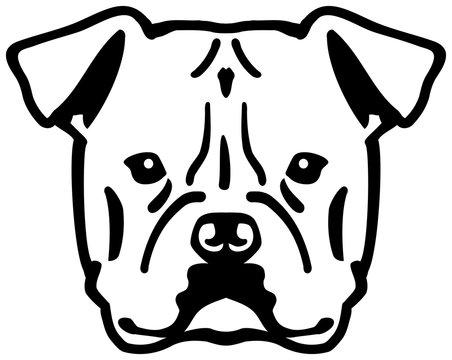 American Bulldog head black and white