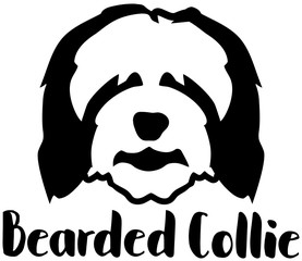 Bearded Collie head word