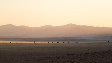 Oryx Desert Line