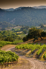Central Coast winery and vineyards in Arroyo Grande, California.